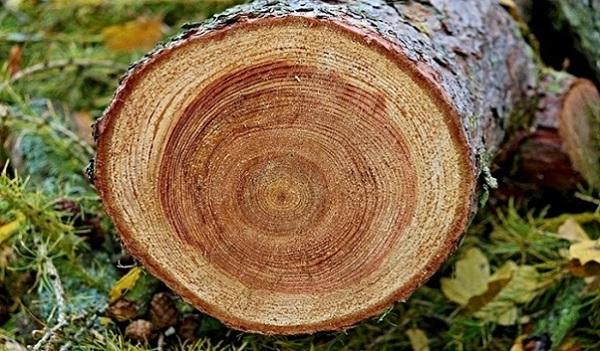 điều kiện xuất khẩu gỗ