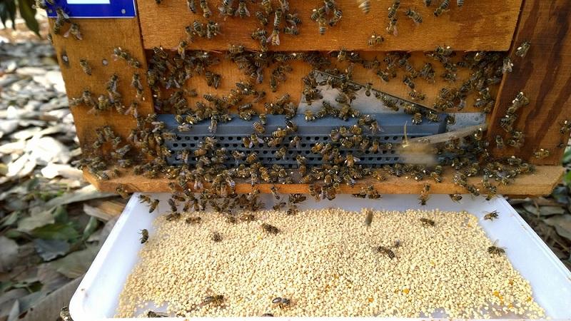 xuất khẩu mật ong